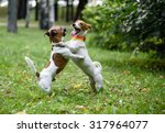 Stock photo two dogs playing and dancing 317964077