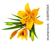 yellow lily flower with buds... | Shutterstock . vector #318090365