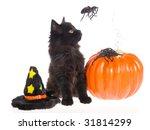 Black Maine Coon Kitten Looking ...
