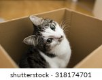 Stock photo cat in the box 318174701