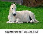 White Horse Resting On Spring...