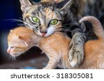 Mother Cat With Newborn Kitten.