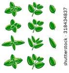 mint leaves set. vector   Shutterstock .eps vector #318434837