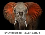 beautiful african elephants in... | Shutterstock . vector #318462875