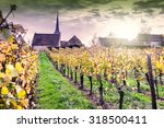 sunset over autumn vineyards of ... | Shutterstock . vector #318500411