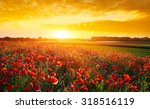 poppy field in summer... | Shutterstock . vector #318516119