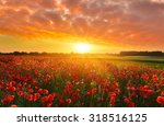 poppy field | Shutterstock . vector #318516125