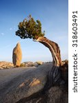 A Small Lone Tree Growing On A...