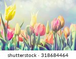 Beautiful Tulips Flowers Bed I...