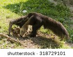 anteater burrowing in the ground | Shutterstock . vector #318729101