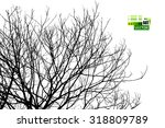 Bare Tree Branches. Vector