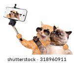 Stock photo cats taking a selfie with a smartphone 318960911