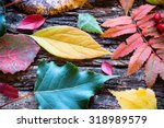 Background Of Colorful Autumn...