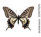 Beautiful Yellow Butterfly ...