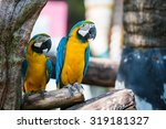Two Beautiful Colorful Macaw...