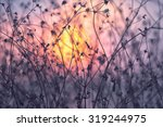 dried flowers on a background... | Shutterstock . vector #319244975
