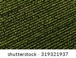 Aerial View Of Harvest  Corn...