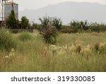 Big Desert Plant With Long...