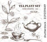 tea plant set. hand drawn.... | Shutterstock .eps vector #319359449