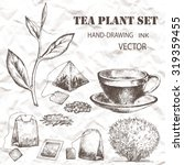 tea plant set. hand drawn.... | Shutterstock .eps vector #319359455