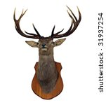 12 Point Red Stag Head Isolate...