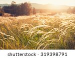 Field With Wild Grasses At...