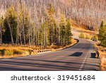 drive through burnt trees | Shutterstock . vector #319451684