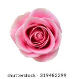 pink rose isolated on white... | Shutterstock . vector #319482299