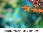 Beautiful Colors Of Autumn. Re...