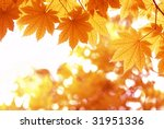 autumn leaves on white | Shutterstock . vector #31951336