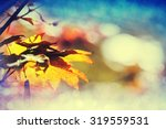 colourful leaves in autumn... | Shutterstock . vector #319559531