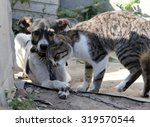 dog and cat together | Shutterstock . vector #319570544