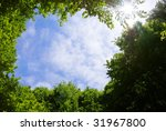 picture frame made of tree tops ... | Shutterstock . vector #31967800