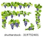 A Set Of Bunches Of Blue Grapes....