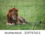 sad ugandan lion deep in... | Shutterstock . vector #319767611