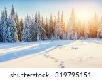 Fantastic Winter Landscape In...