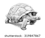 Stock photo a hand drawn turtle illustration of a giant galapagos tortoise walking with its head out of the 319847867