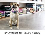 Small photo of Happy dog in pet store