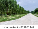 group of trees row beside... | Shutterstock . vector #319881149