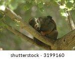 An Adorable Squirrel Monkey...