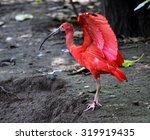 scarlet ibis   Shutterstock . vector #319919435