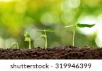 agriculture and seeding plant... | Shutterstock . vector #319946399