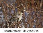 autumn  sparrow sitting on a... | Shutterstock . vector #319955045