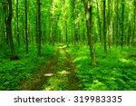 beautiful green forest | Shutterstock . vector #319983335