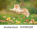 Stock photo funny cat flying in the air in autumn 319985285