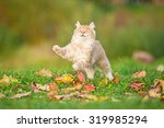 Stock photo little red cat playing in the leaves in autumn 319985294