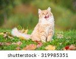 Little Funny Cat Sitting...