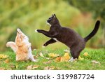 Stock photo two cats playing in autumn 319987724