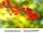 Fall  Autumn  Leaves Backgroun...