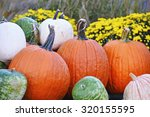 Pumpkins And Gourds And Autumn...